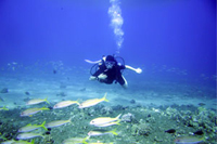 open-scuba diving crete chania