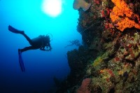 walldive-scuba diving crete chania